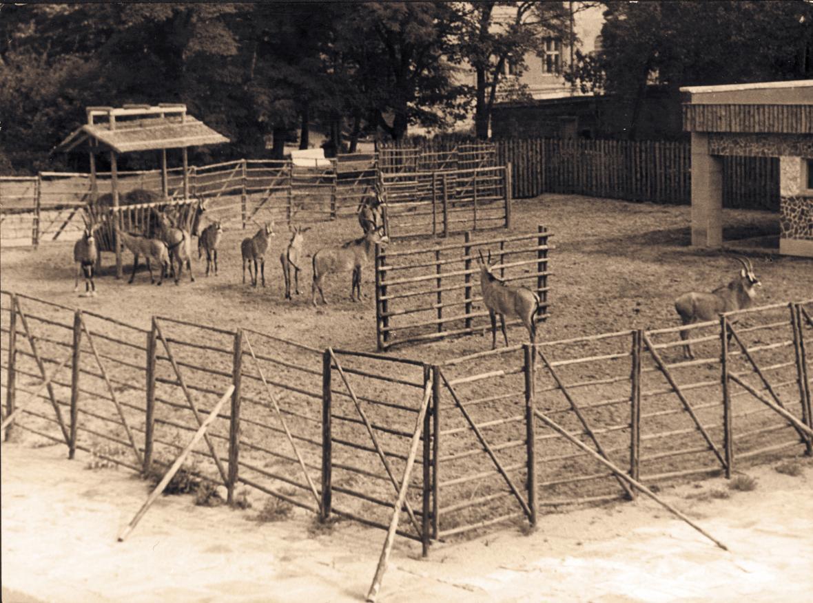 Výběh antilop koňských (rok 1970)