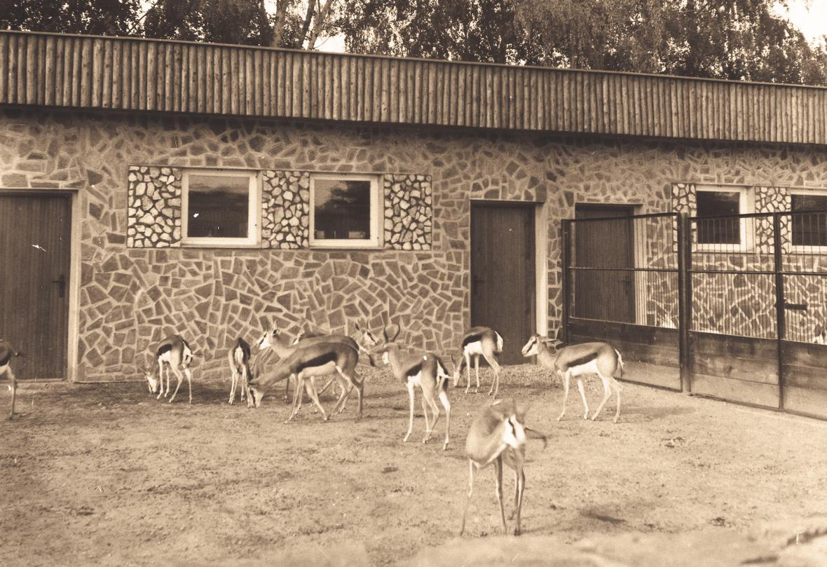 """Místa pro ustájení afrických zvířat vznikla i vedle kempu. Pět pavilonů známých jako """"Domečky"""" pro antilopy a hrochy (rok 1972)"""