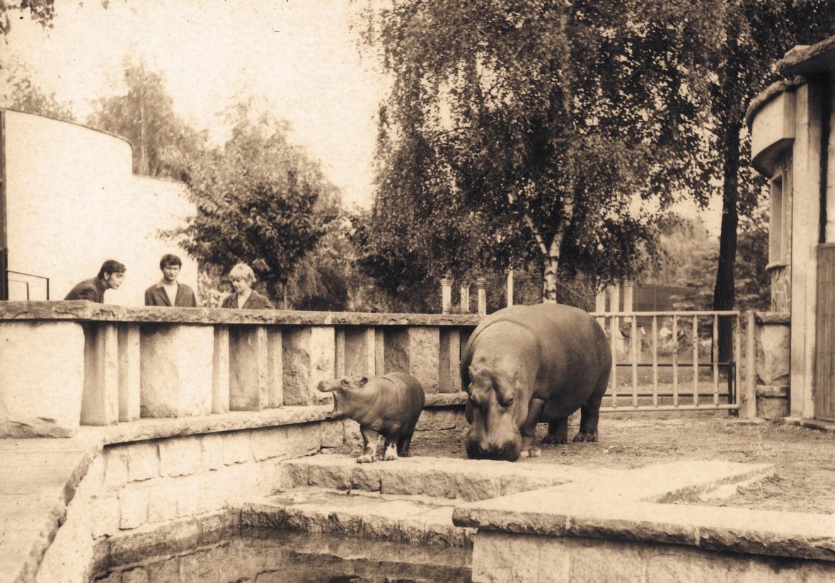 Venkovní bazén hrochů (rok 1973)
