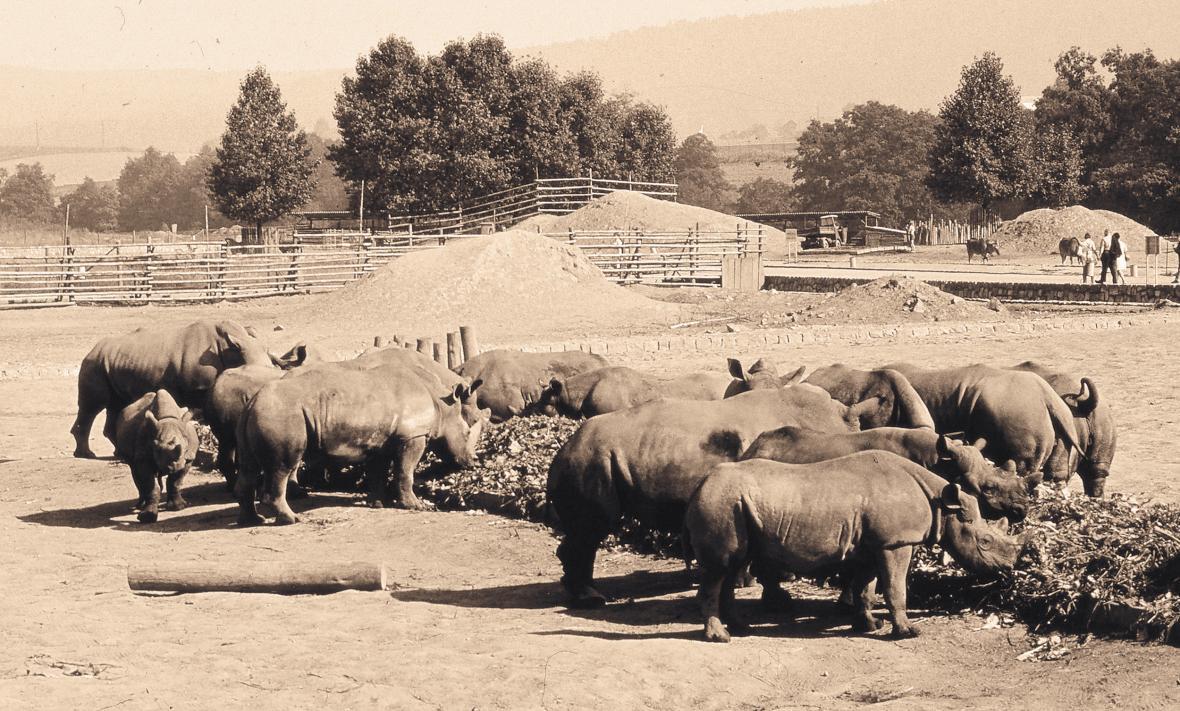 Výběhy afrických kopytníků (rok 1973)