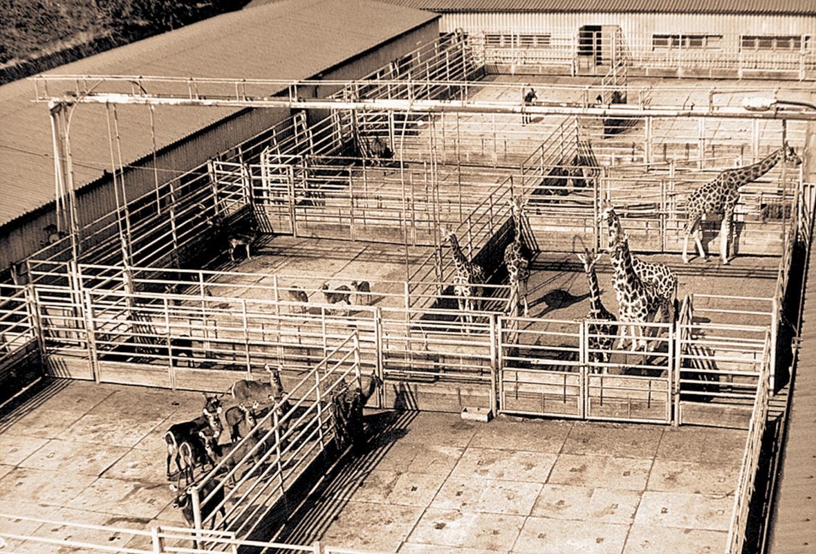 Bazén pro hrochy a slony (rok 1975)
