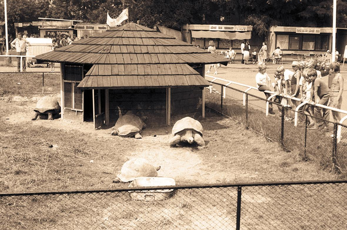 Expozice želv obrovských (rok 1986)