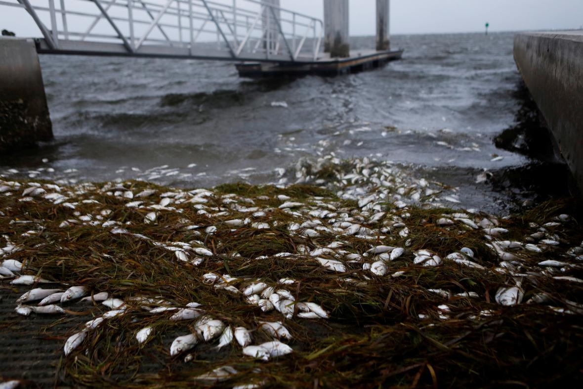 K poobřeží Floridy se blíží hurikán Elsa