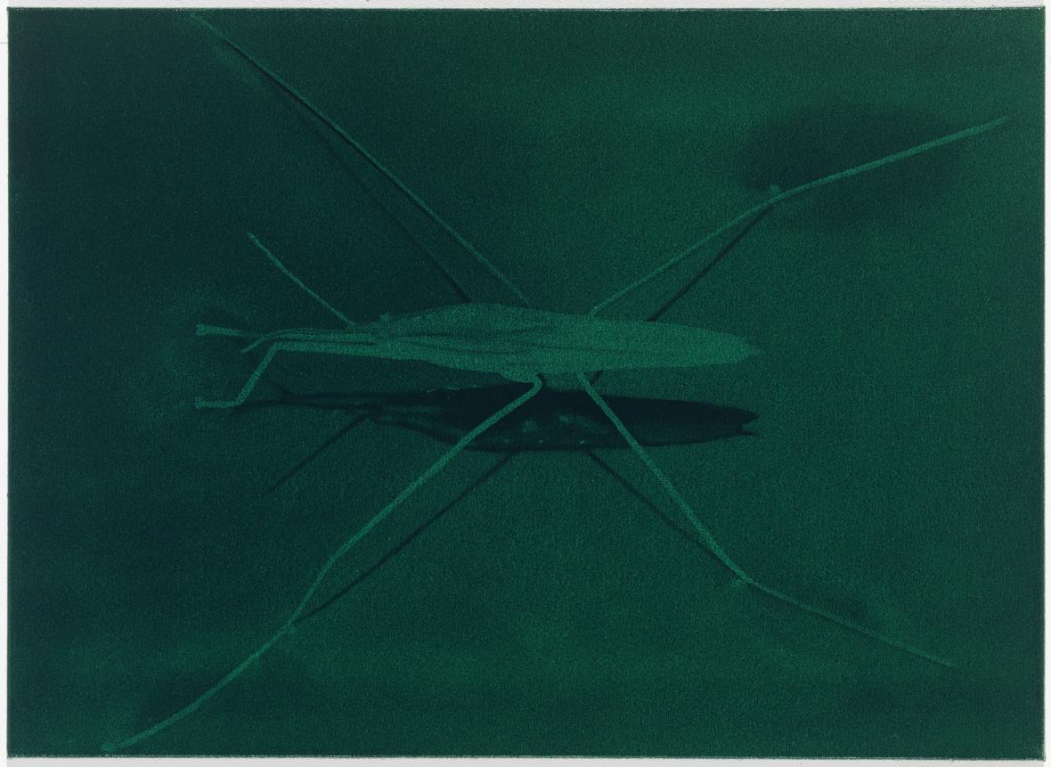 Eberhard Havekost, Drone, B12, 2012, olej na plátně