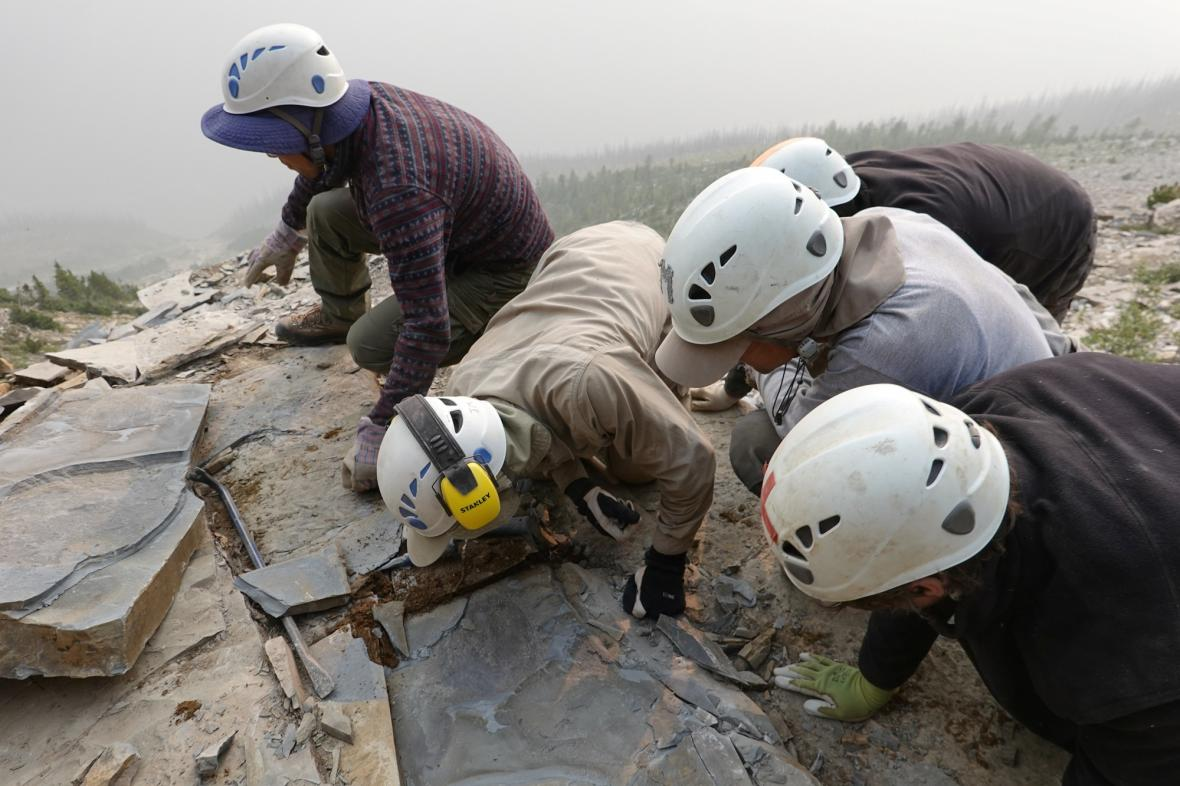 Paleontologové u objevu Titanokorys gainesi