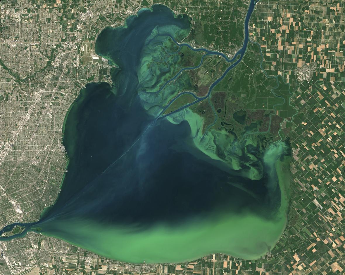 Přemnožené sinice na kanadském jezeře Lake St. Clair v létě roku 2015