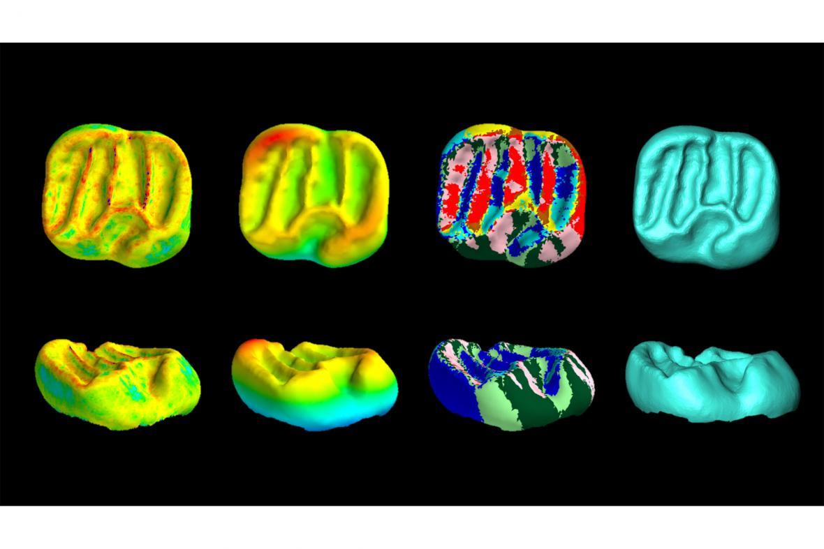 Ukázka pravěkých zubů prokoumaných pomocí počítačové tomografie