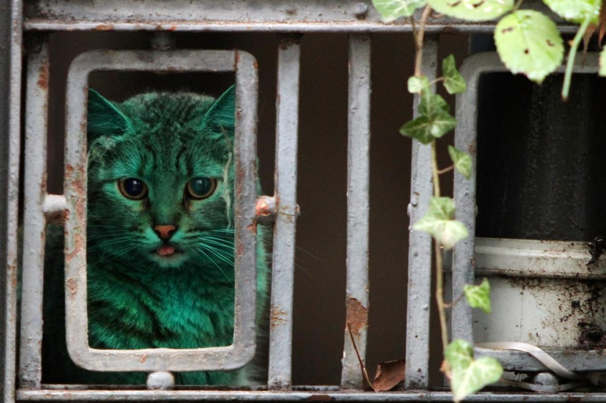 Zelená kočka v bulharské Varně