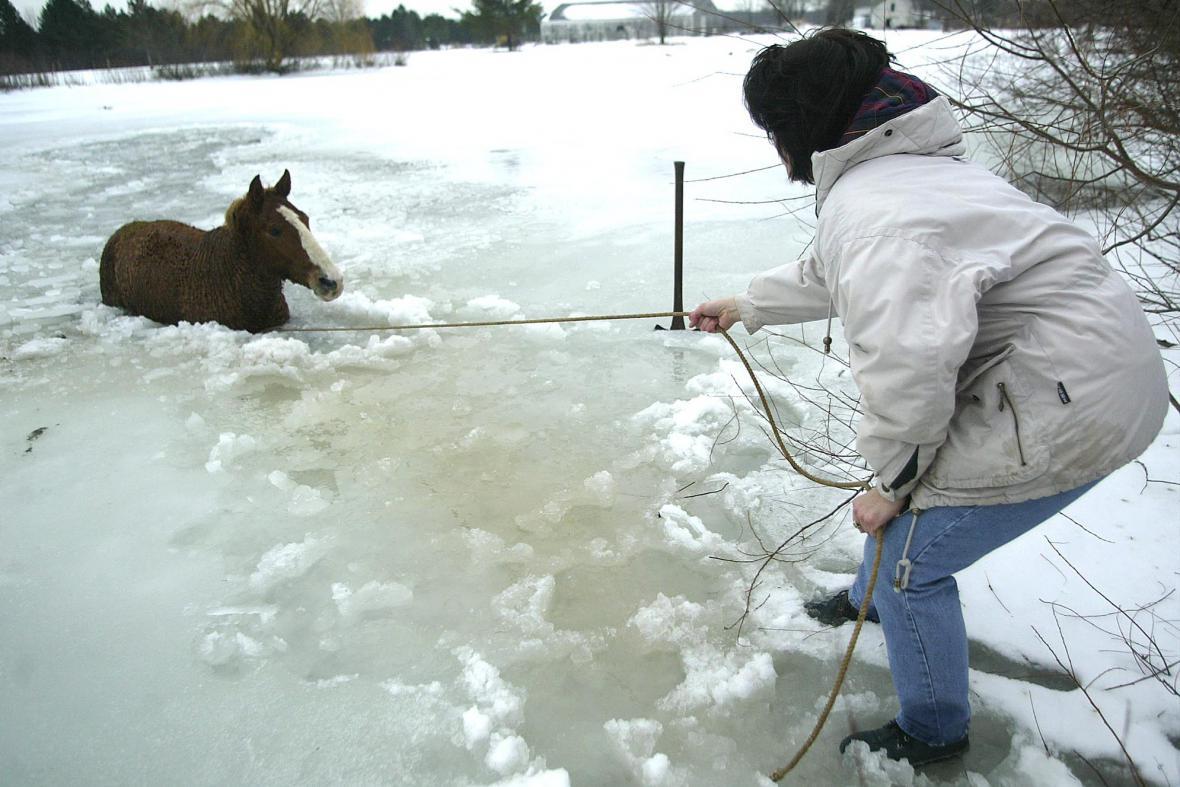 Propadený kůň