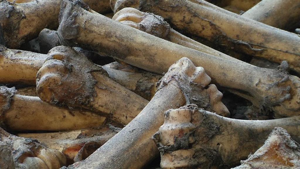 Kosti jako lukrativní materiál šperkařů