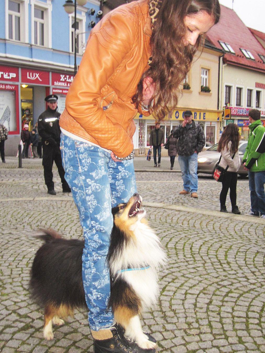 Sbírka pro opuštěná zvířata v Boskovicích