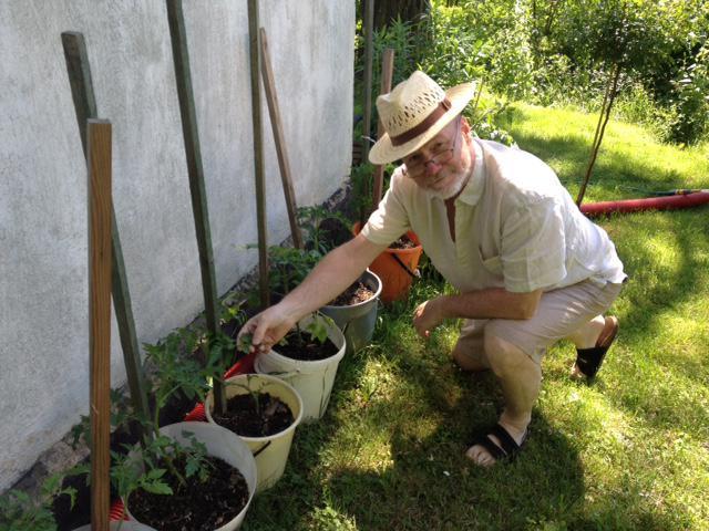 7. června jsem sázel sazenice rajčat