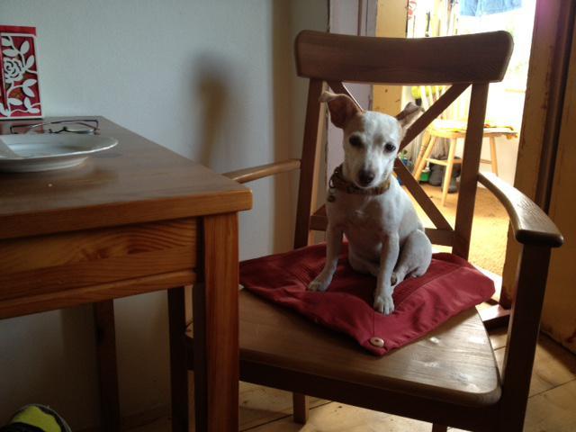 15. srpna jsme měl na hlídání dceřina psíka Lejdynku
