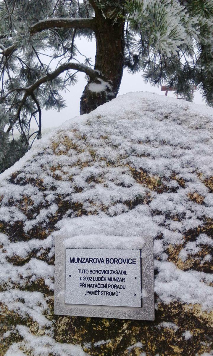 3. prosince se ke mně skrze Facebook dostala fotografie borovice, kterou před 12 lety zasadil pan Munzar