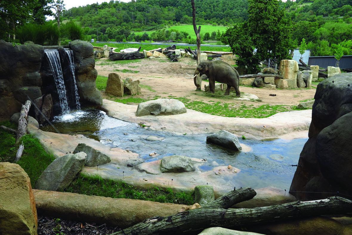 Údolí slonů v Zoo Praha