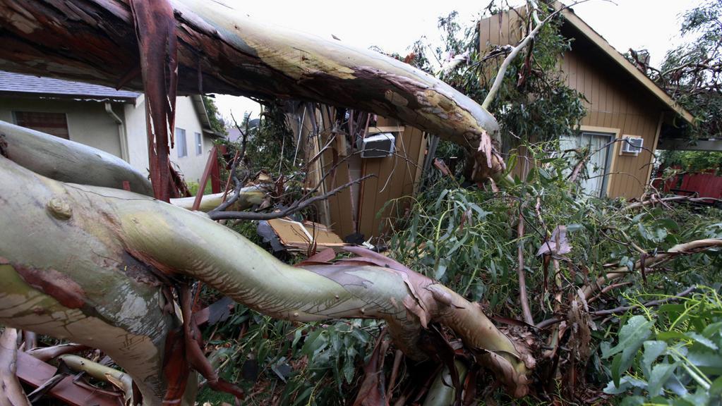 Vyvrácený strom v Union City