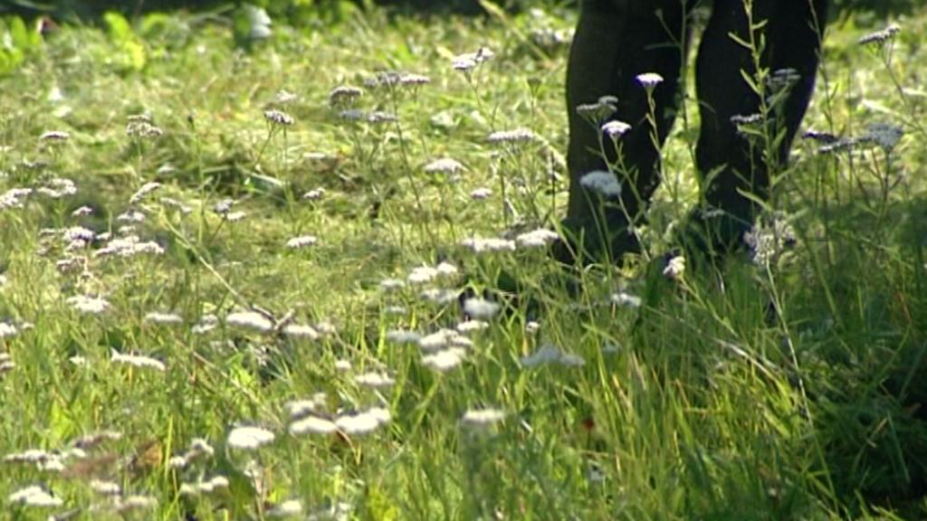 Sekání trávy ve Žluticích