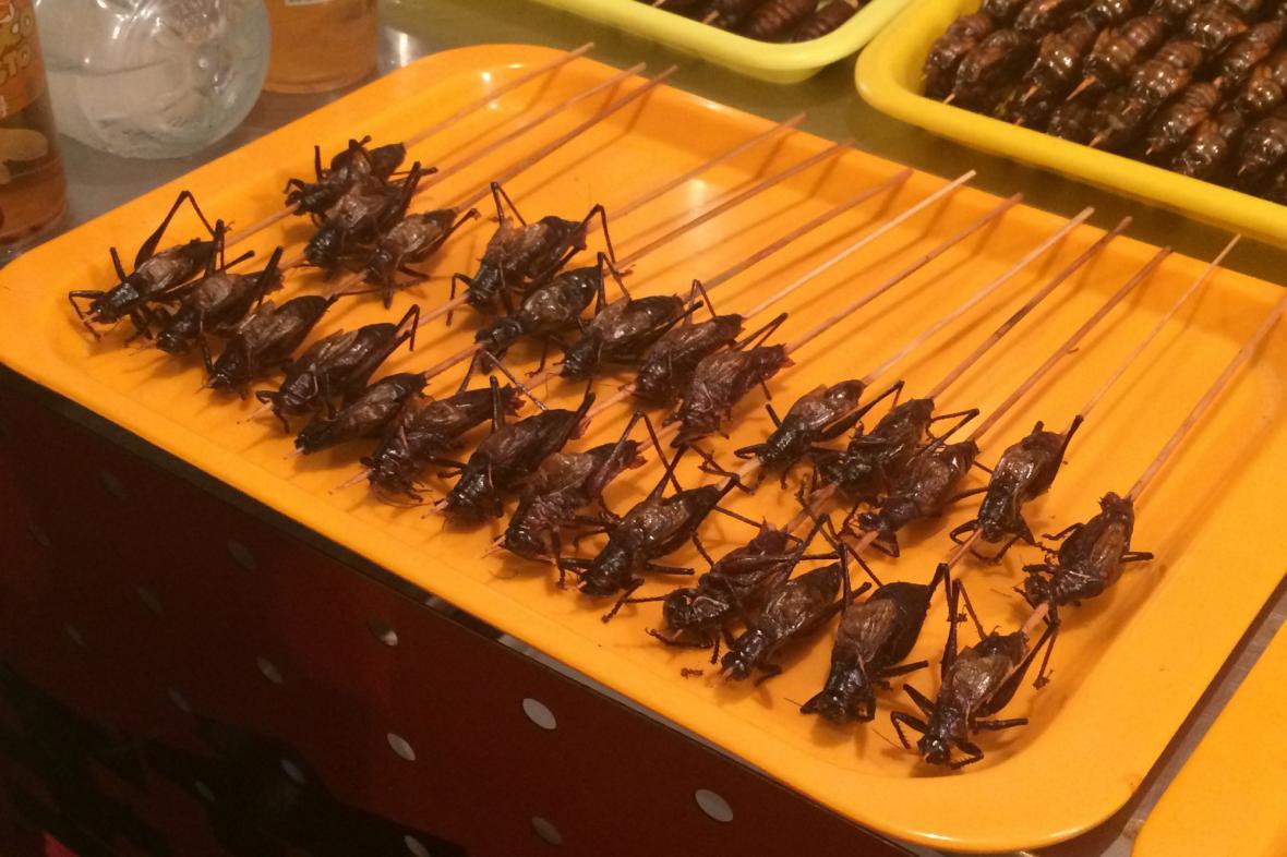 Špíz ze smažených kobylek