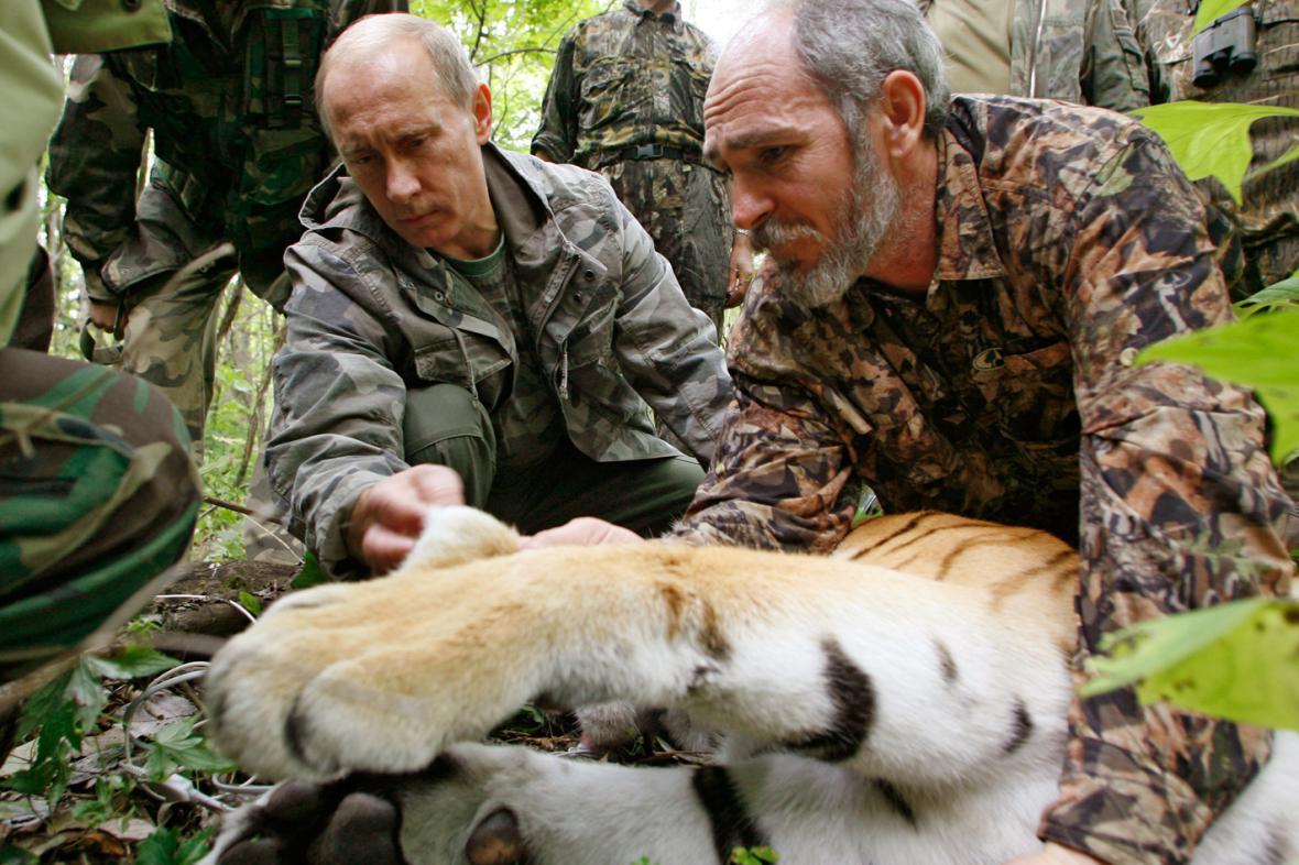 Vladimir Putin s uspaným tygrem