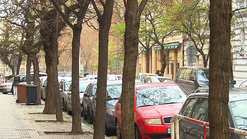 Stromy ve městě