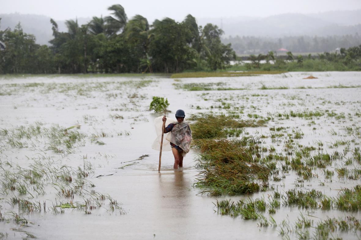 Zaplavené rýžové pole ve filipínské provincii Albay