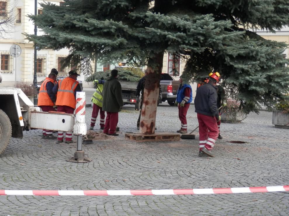 Usazování stromu
