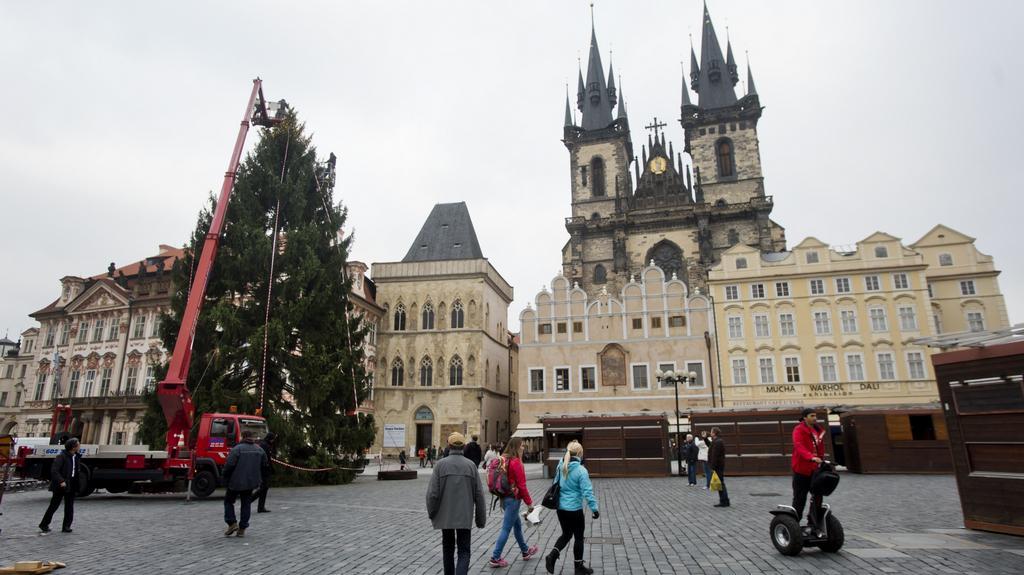 Vánoční strom letos pochází z Nespek u Prahy