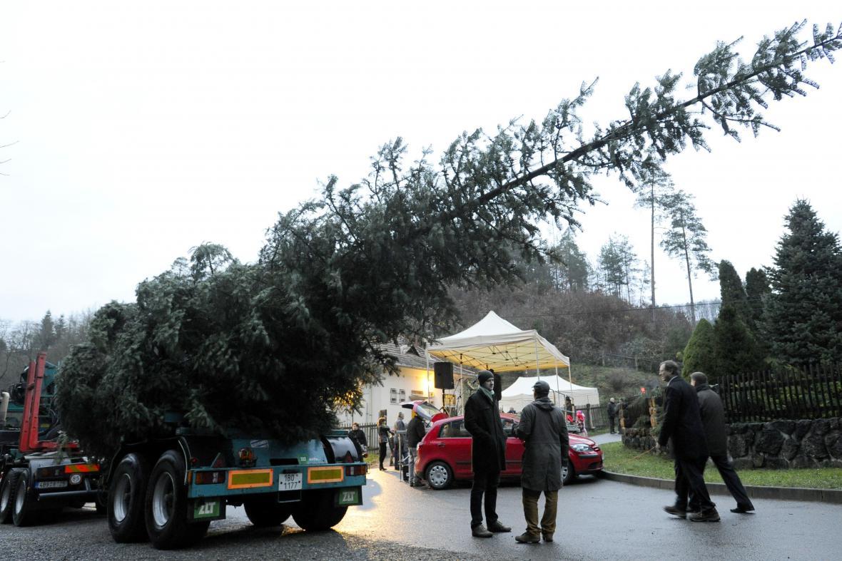 Vánoční strom pro Brno