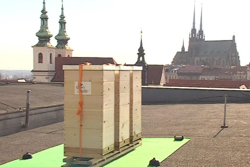 Úly na střeše Hotelu International