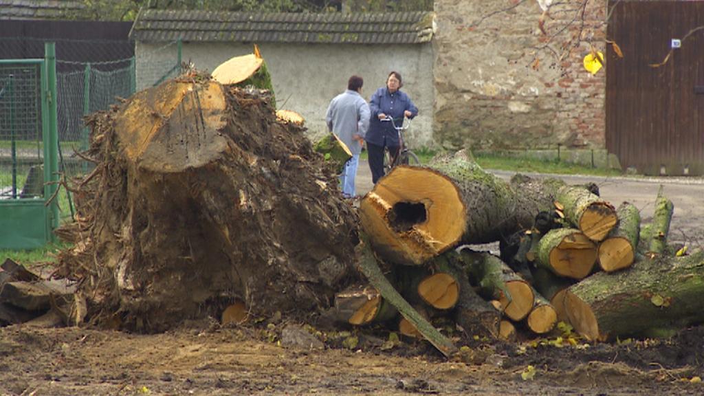 Vykácené stromy a pařezy ve Slavonicích
