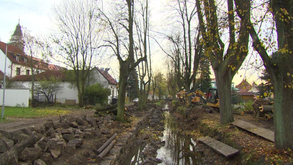 Alej ve Slavonicích, kde vykáceli část stromů