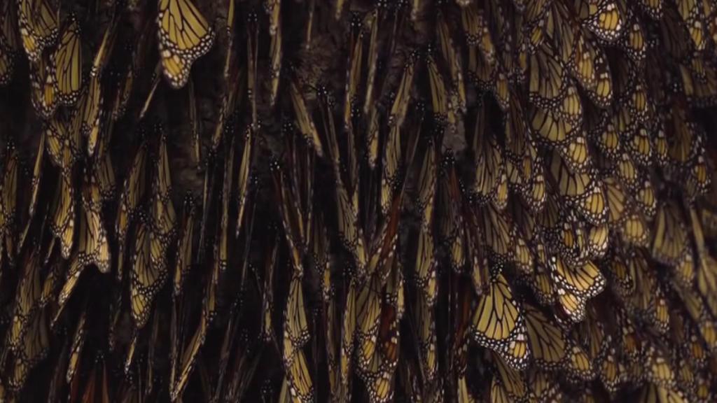 Monarchové