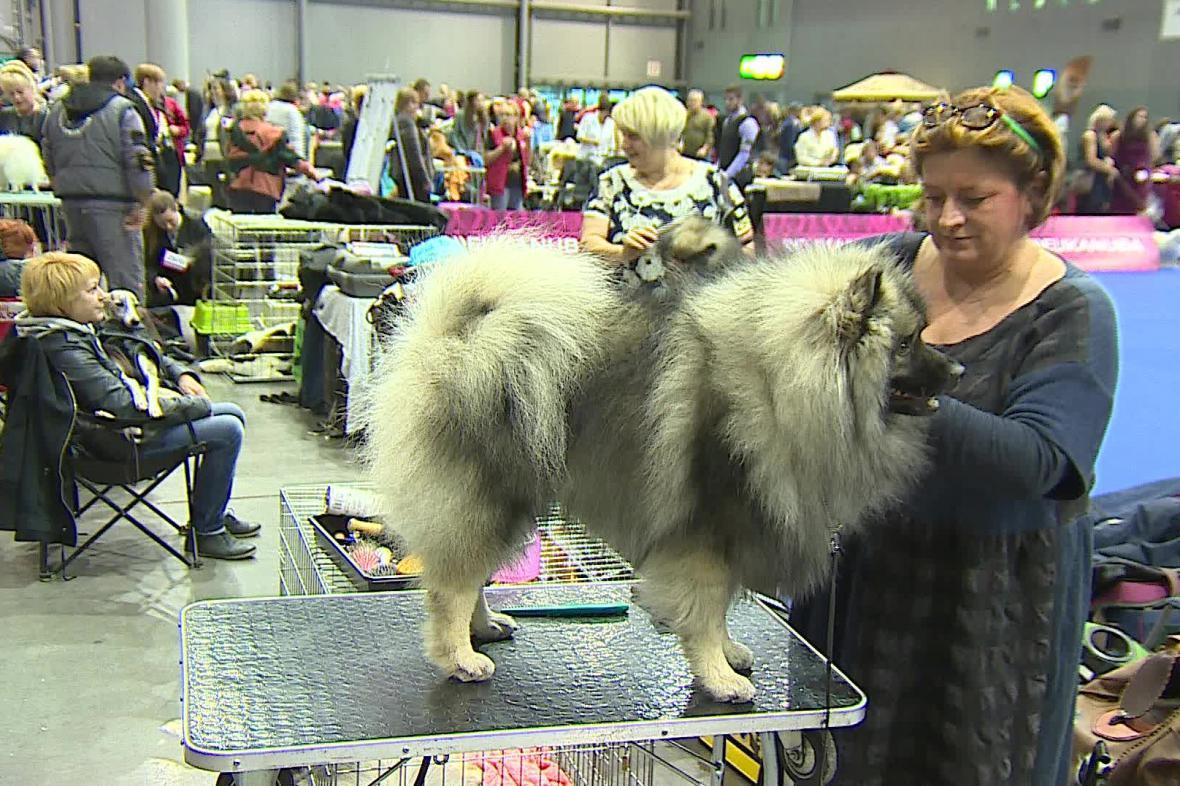 Evropská výstava psů v Brně