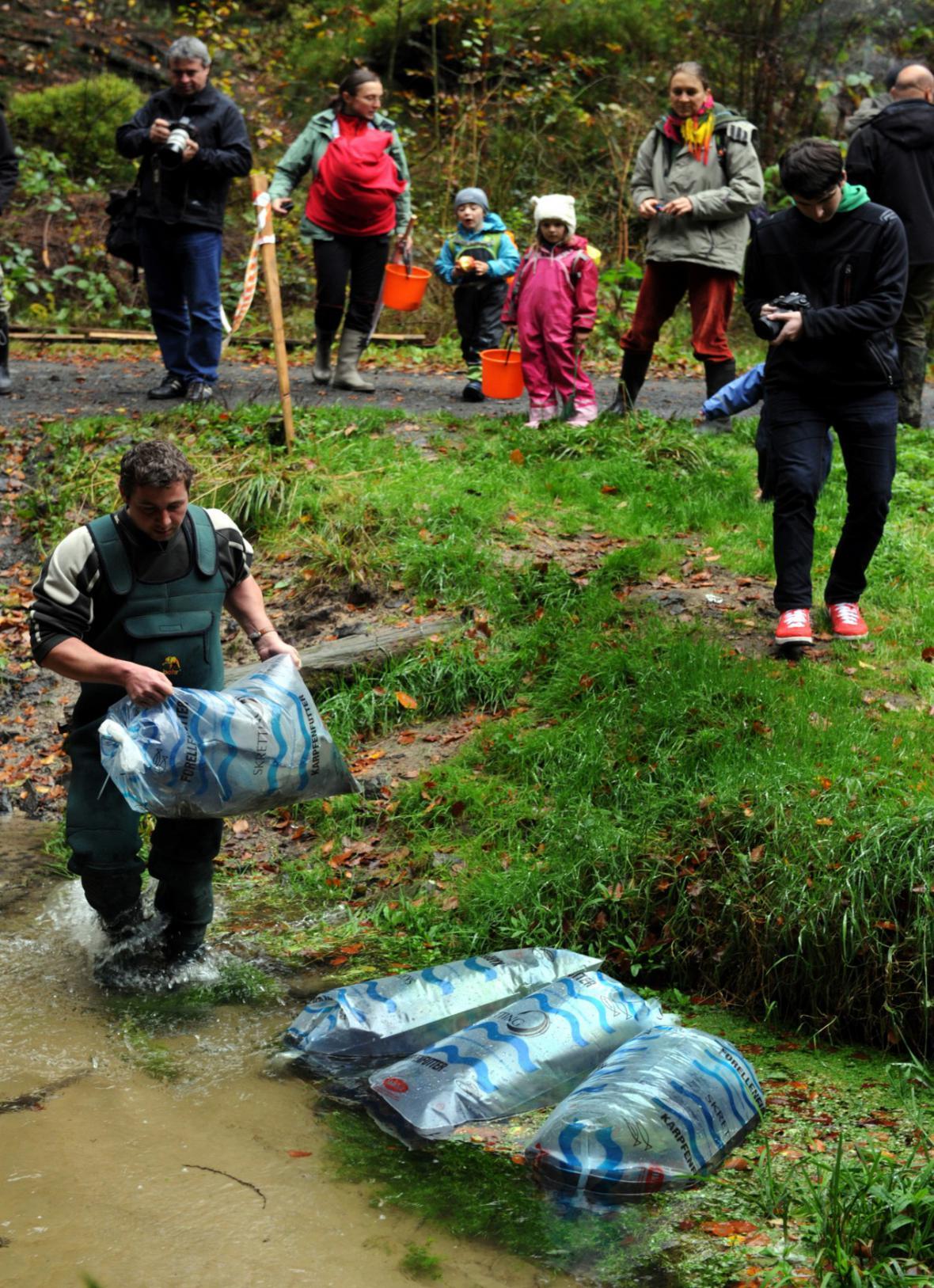 Vypouštění lososů do Kamenice