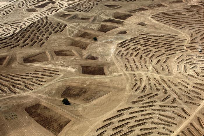 Fazal Sheikh / ze série Květ pouště, 2011