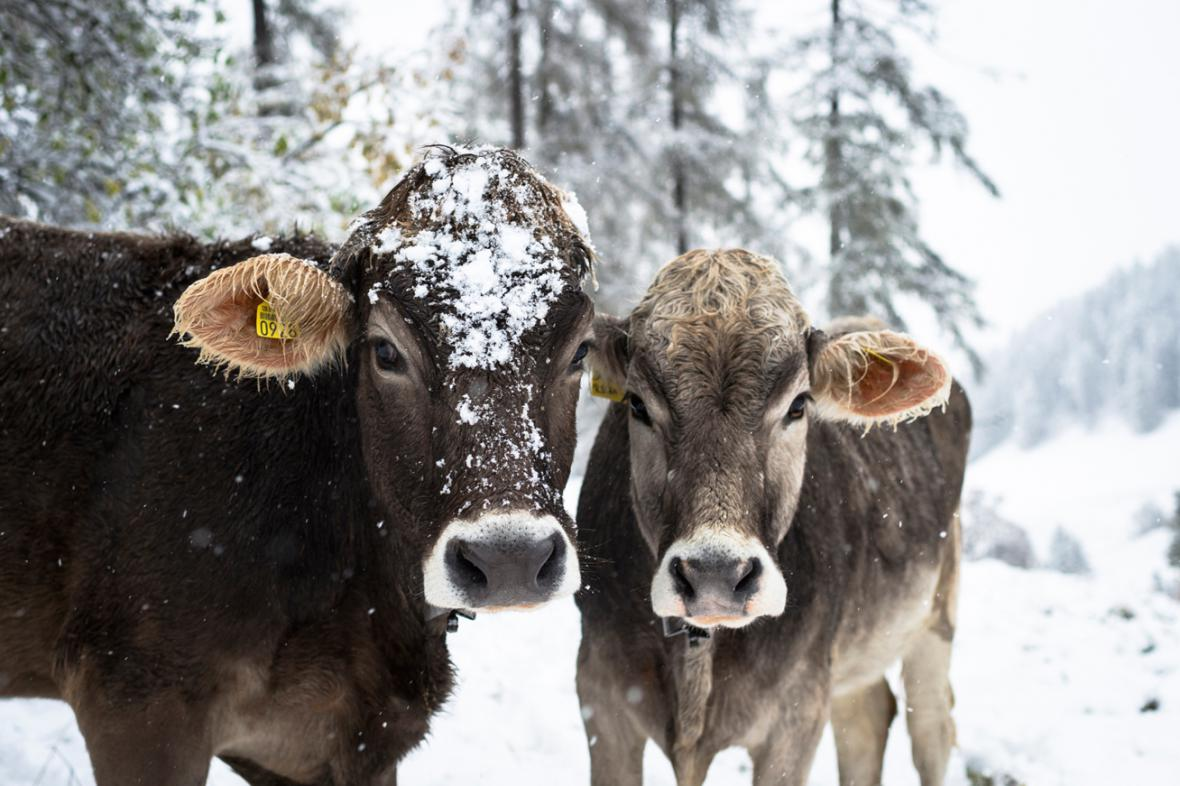 První sníh ve Švýcarsku