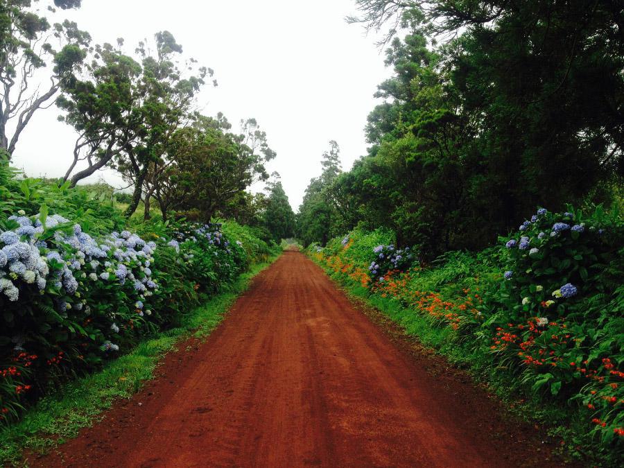 Azorské ostrovy - nespočet odstínů zelené