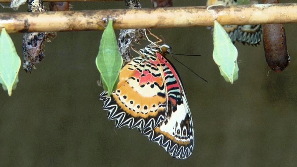 Motýlí centrum v Kambodži