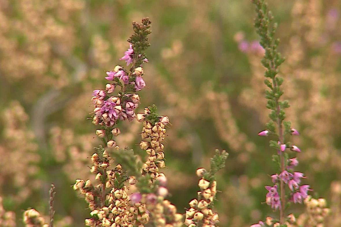 Rostliny v Národním parku Podyjí znovu vykvetly