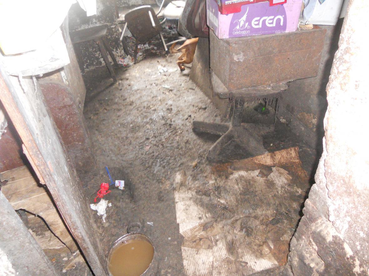 Stáj, kde žili týraní psi