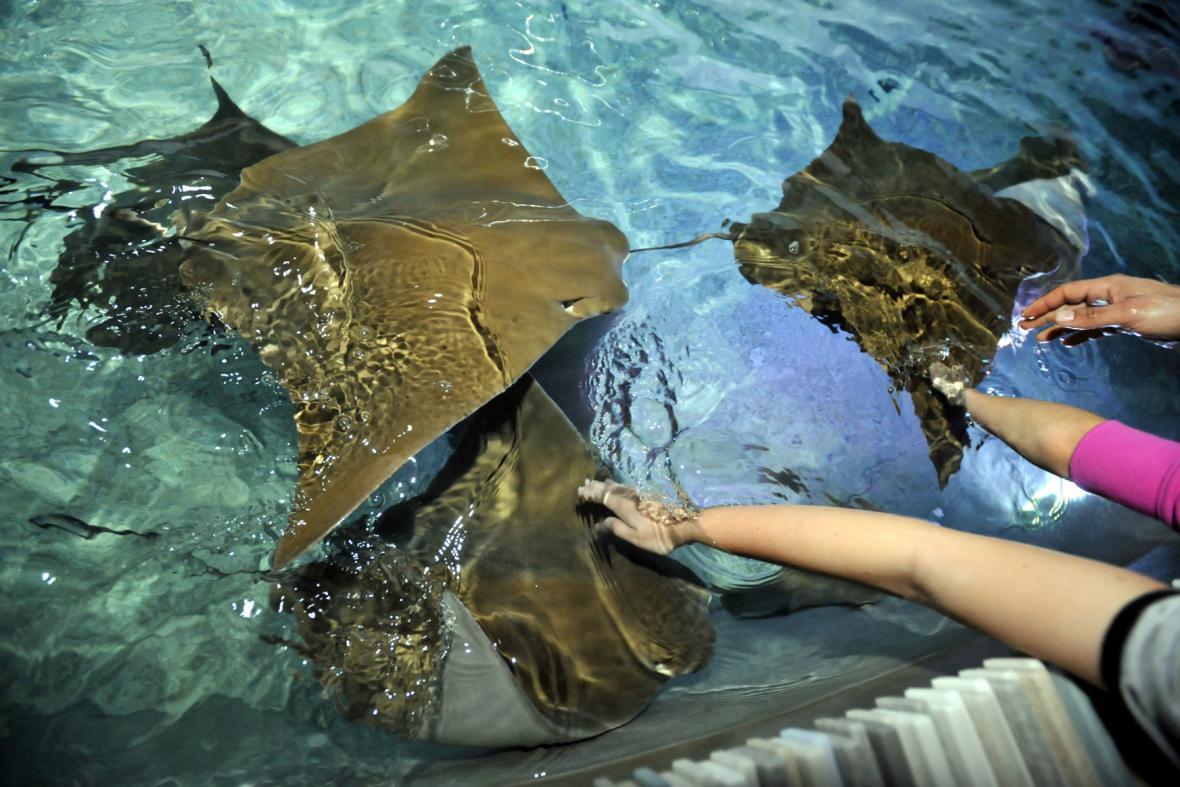Zlínská zoo otevřela expozici Zátoka rejnoků