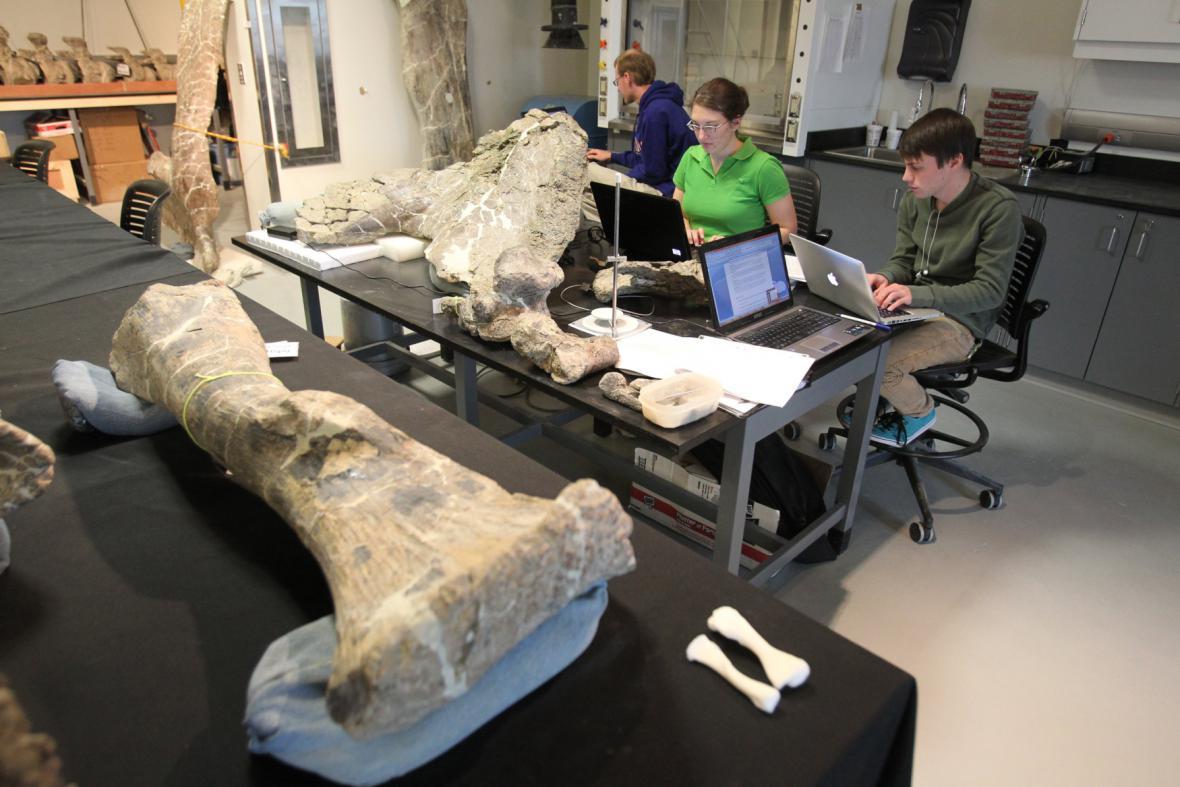 Dreadnoughtusovy kosti