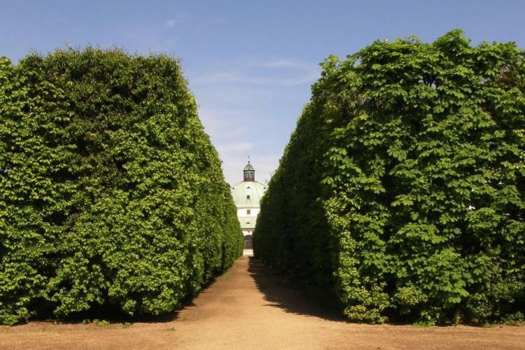 Zelené stěny v kroměřížské zahradě
