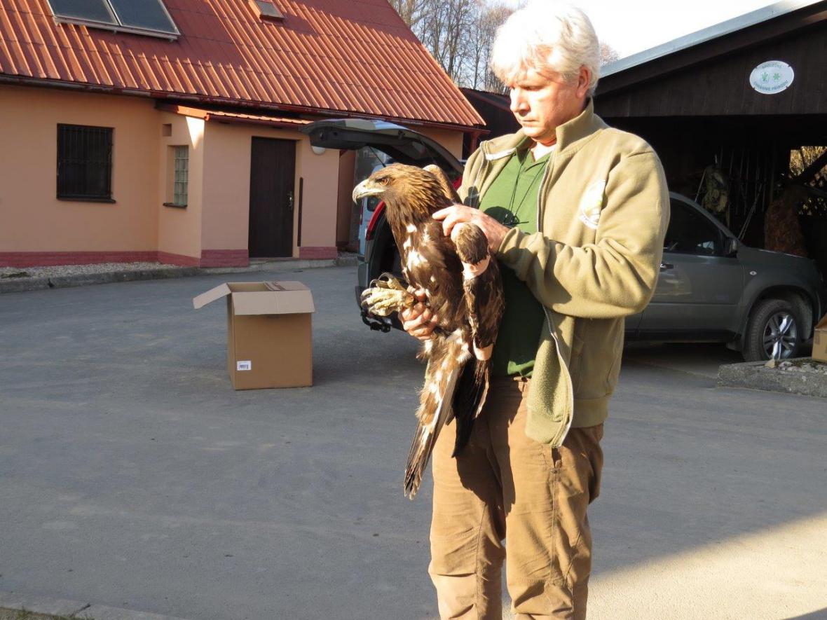 Postřelená orlice Tonička s ornitologem Petrem Orlem
