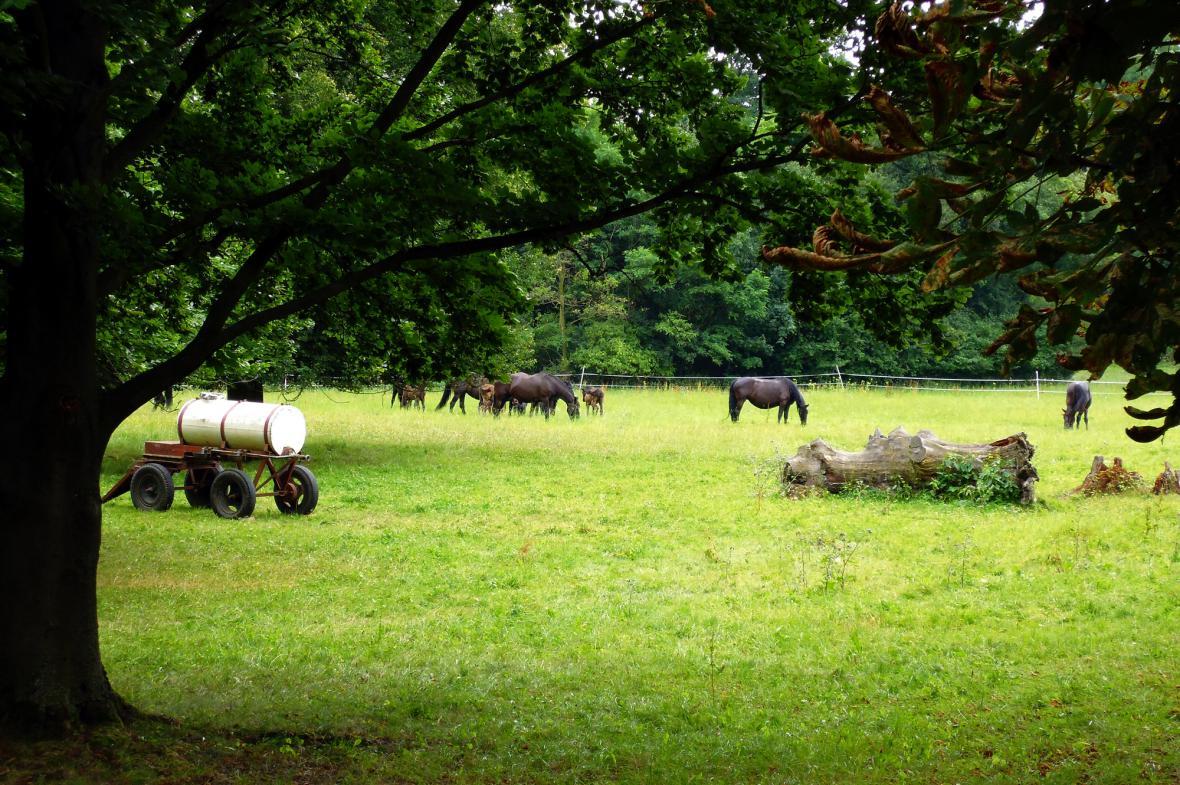 Slatiňany už více než 60 let patří koním