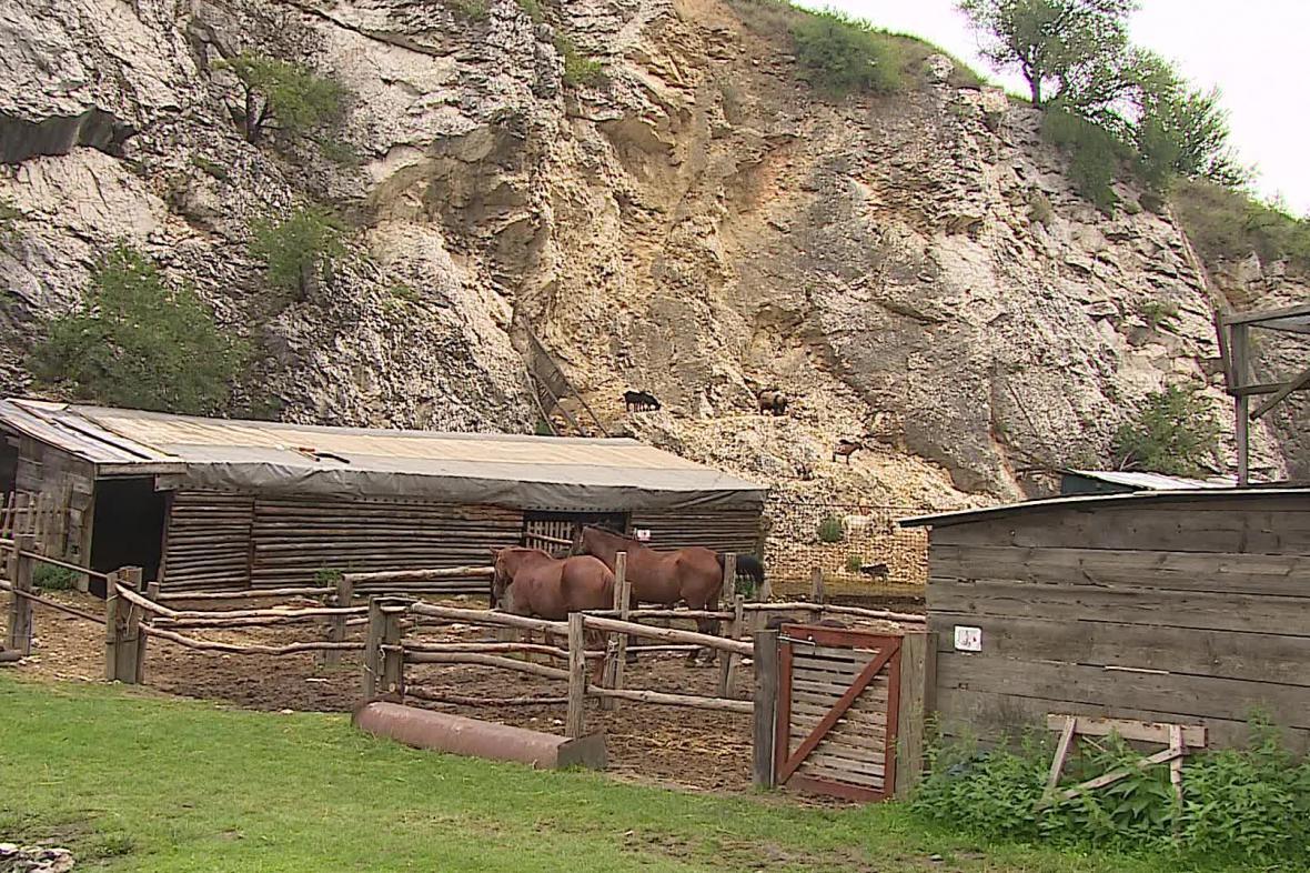 Pony ranč Zdeňka Veselského u Klentnice
