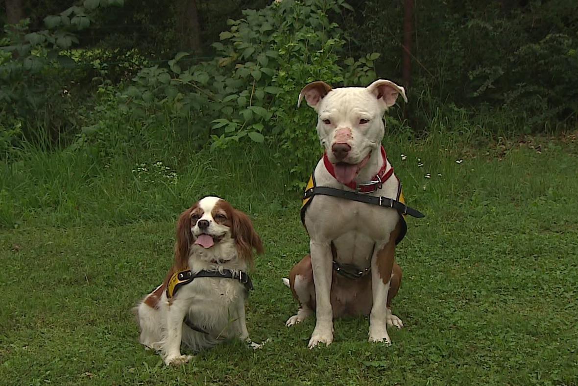 Canisterapeutičti psi