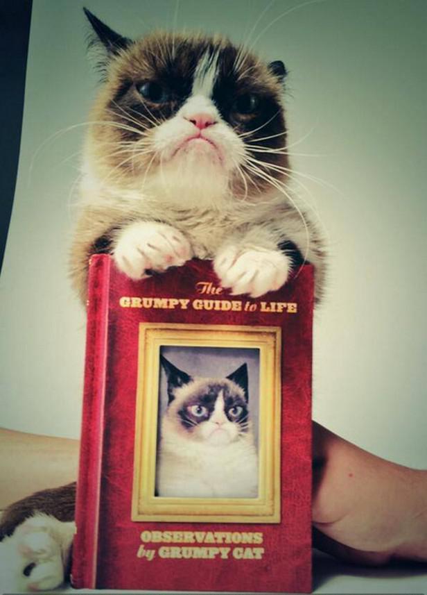 Grumpy cat pózuje s vlastní knihou