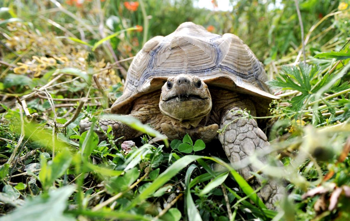 Želví safari u Vysokého Mýta