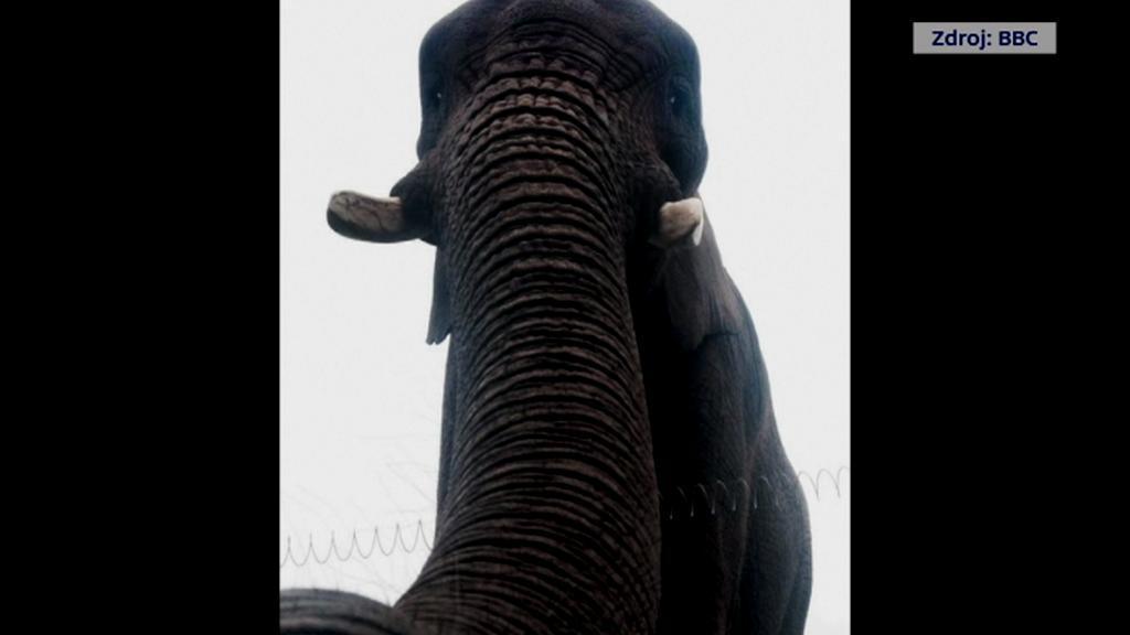 Sloní selfie